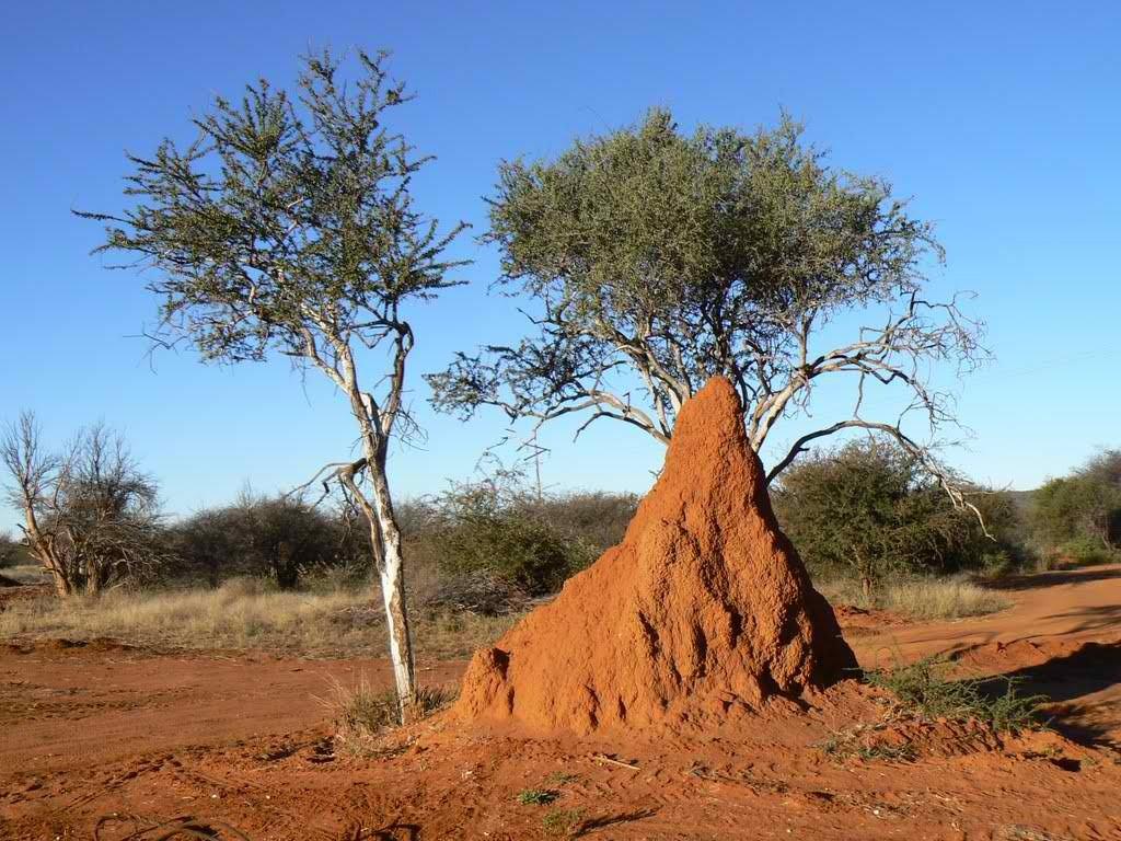 Ants' hills