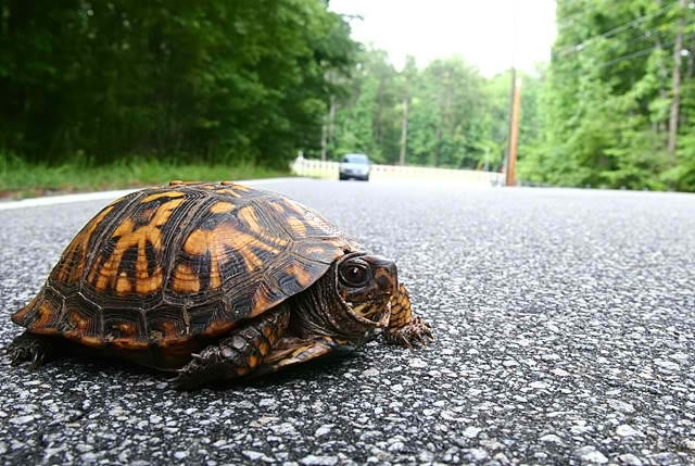 Turtles on the road